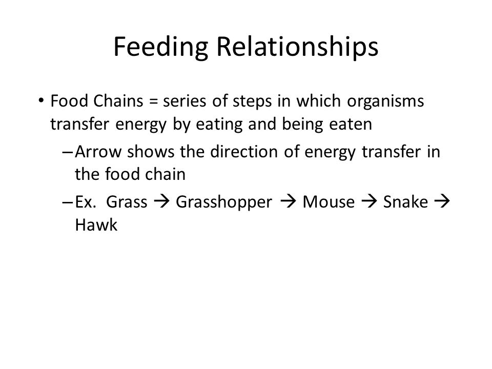 Feeding Relationships Food web = links all food chains together in an ecosystem