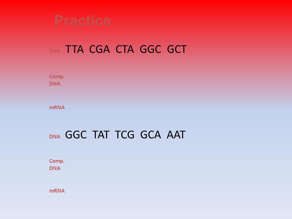 DNA TTA CGA CTA GGC GCT Comp. DNA mRNA DNA GGC TAT TCG GCA AAT Comp. DNA mRNA Practice