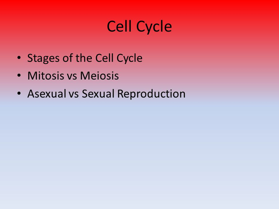 Cell Cycle Stages of the Cell Cycle Mitosis vs Meiosis Asexual vs Sexual Reproduction