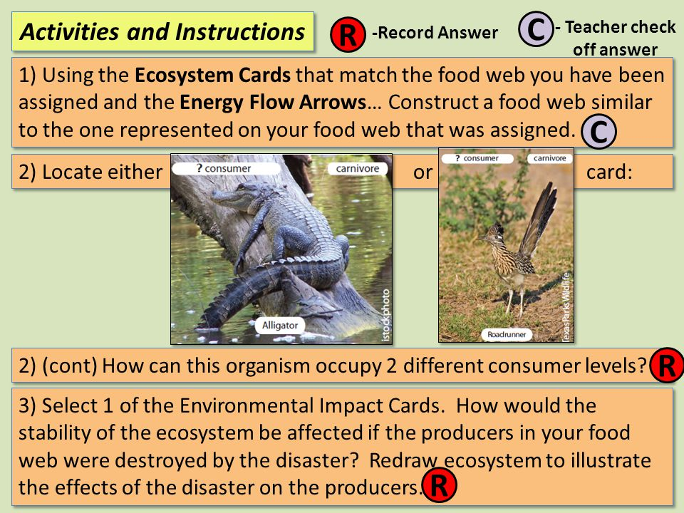 1) Using the Ecosystem Cards that match the food web you have been assigned and the Energy Flow Arrows… Construct a food web similar to the one repres