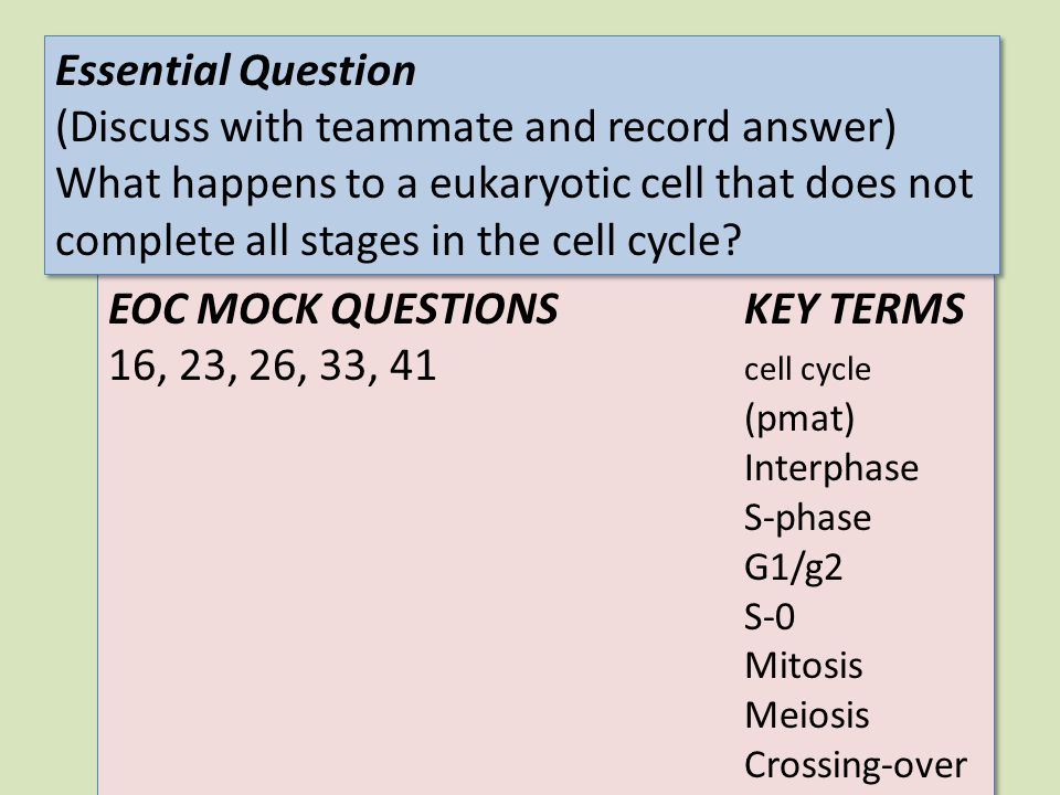 EOC MOCK QUESTIONSKEY TERMS 16, 23, 26, 33, 41 cell cycle (pmat) Interphase S-phase G1/g2 S-0 Mitosis Meiosis Crossing-over EOC MOCK QUESTIONSKEY TERM