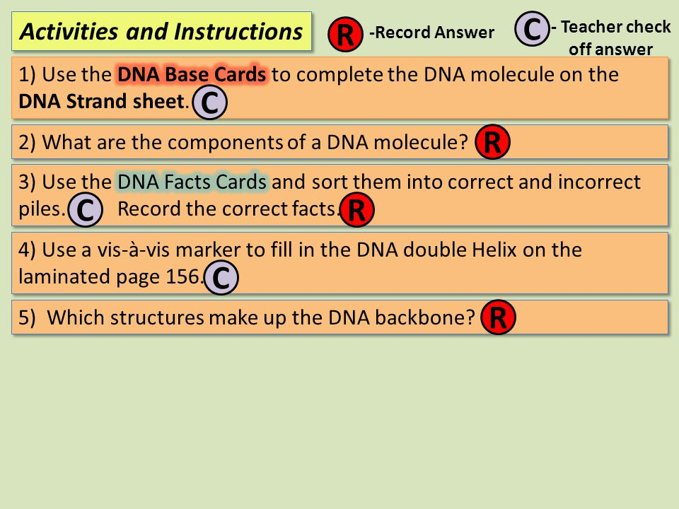 Activities and Instructions R C -Record Answer - Teacher check off answer C 2) What are the components of a DNA molecule? R CR 4) Use a vis-à-vis mark