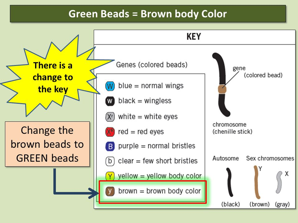 Change the brown beads to GREEN beads Green Beads = Brown body Color There is a change to the key