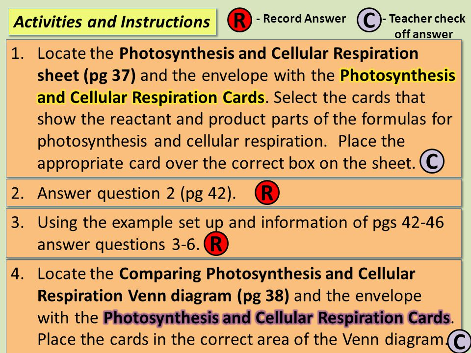 Activities and Instructions R C -Record Answer - Teacher check off answer 7) Record the missing genotypes for the Punnett Square by number: 4 3 2 1 R Answer questions 8 and 9 in your journals.