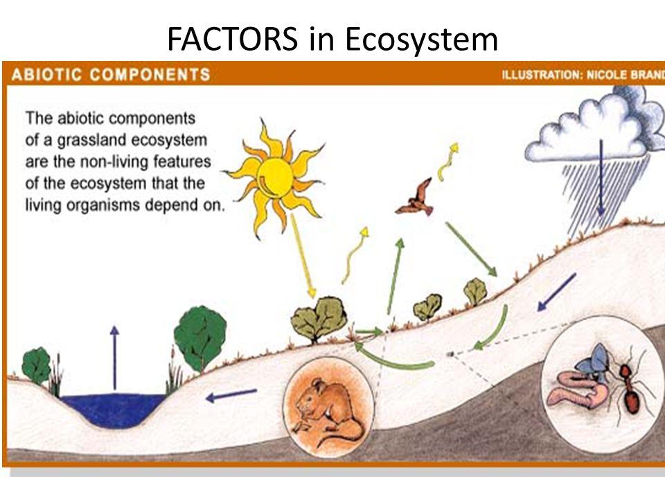 FACTORS in Ecosystem