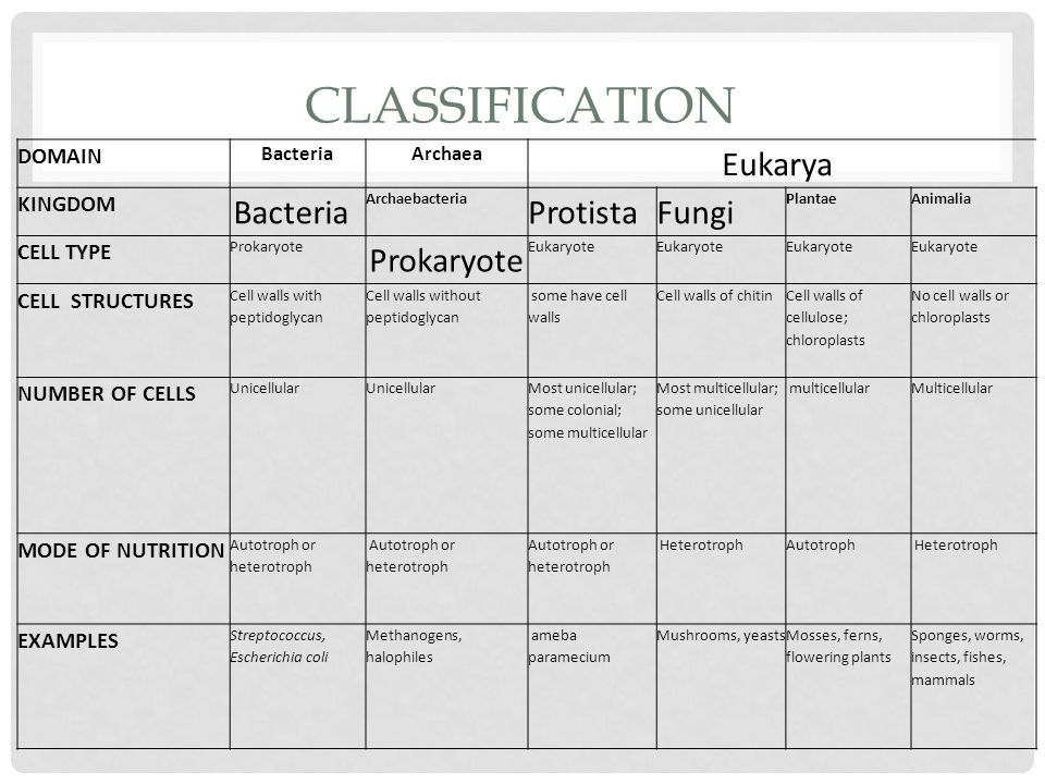 CLASSIFICATION DOMAIN BacteriaArchaea Eukarya KINGDOM Bacteria Archaebacteria ProtistaFungi PlantaeAnimalia CELL TYPE Prokaryote Eukaryote CELL STRUCTURES Cell walls with peptidoglycan Cell walls without peptidoglycan some have cell walls Cell walls of chitin Cell walls of cellulose; chloroplasts No cell walls or chloroplasts NUMBER OF CELLS Unicellular Most unicellular; some colonial; some multicellular Most multicellular; some unicellular multicellularMulticellular MODE OF NUTRITION Autotroph or heterotroph HeterotrophAutotroph Heterotroph EXAMPLES Streptococcus, Escherichia coli Methanogens, halophiles ameba paramecium Mushrooms, yeastsMosses, ferns, flowering plants Sponges, worms, insects, fishes, mammals
