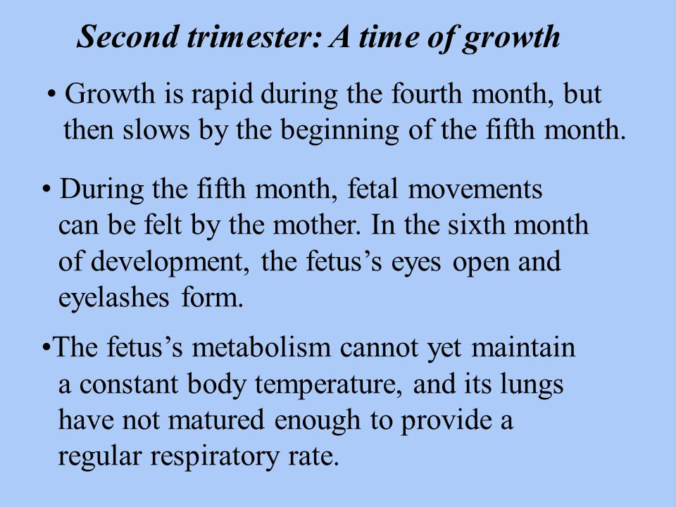 Section 38.2 Summary – pages 1005-1011 During the first trimester, all the organ systems of the embryo begin to form.
