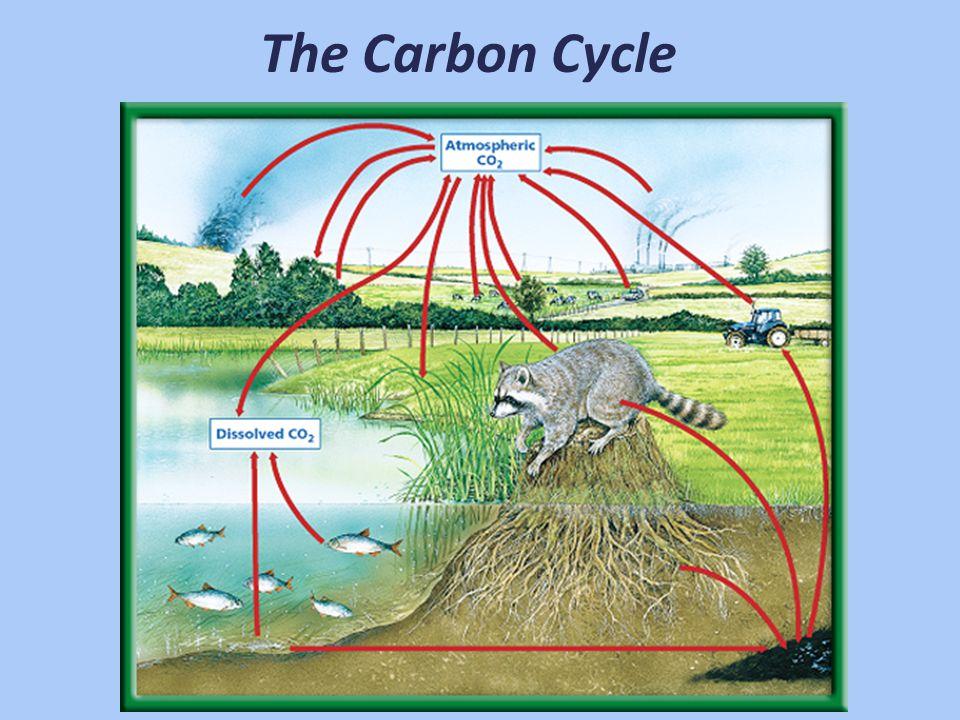 Water Cycle Condensation Precipitation Evaporation Runoff Groundwater Evaporation Transpiration