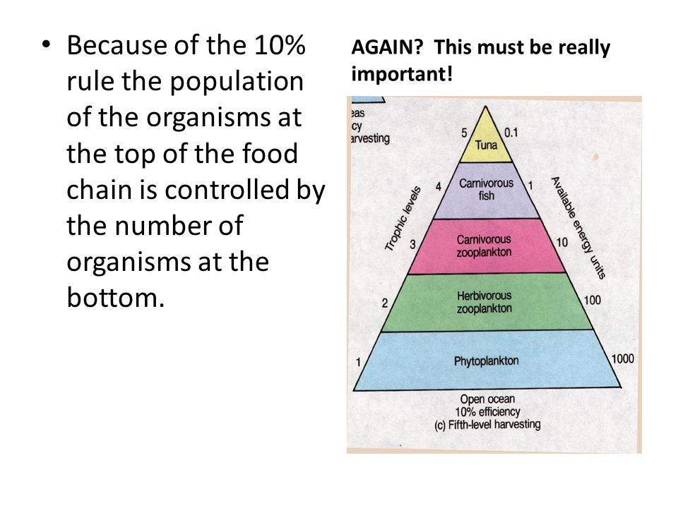Because of the 10% rule the population of the organisms at the top of the food chain is controlled by the number of organisms at the bottom. AGAIN? Th