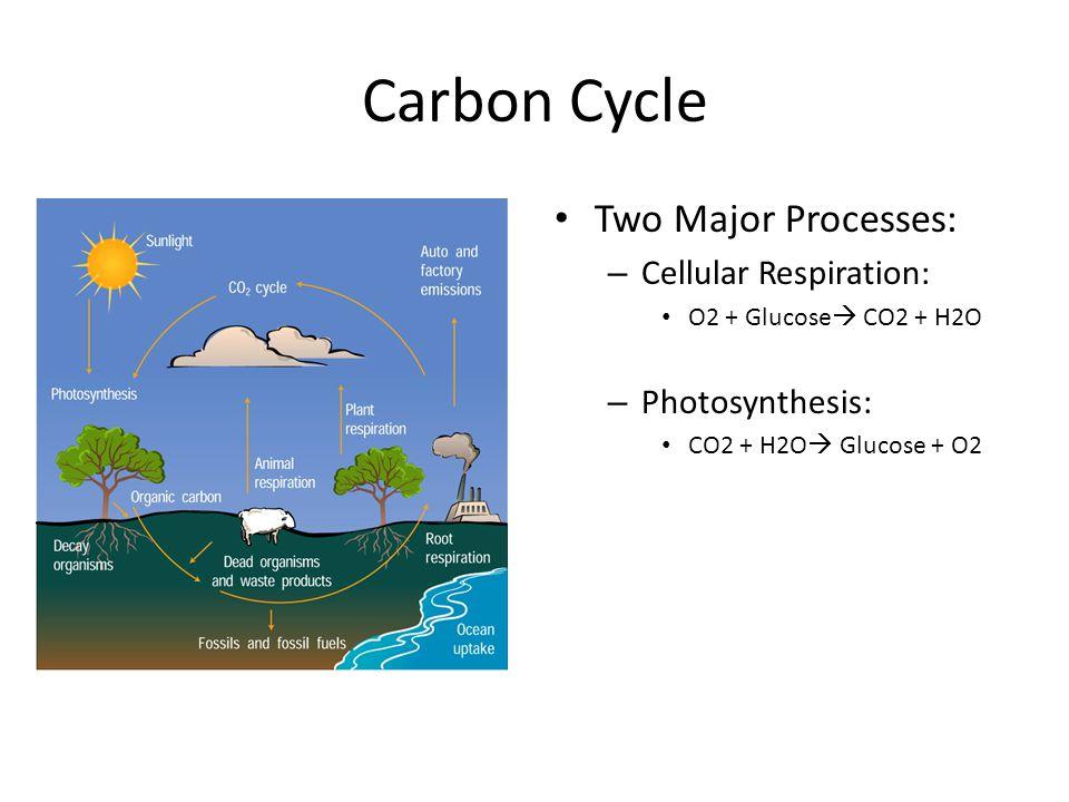 Carbon Cycle Two Major Processes: – Cellular Respiration: O2 + Glucose  CO2 + H2O – Photosynthesis: CO2 + H2O  Glucose + O2