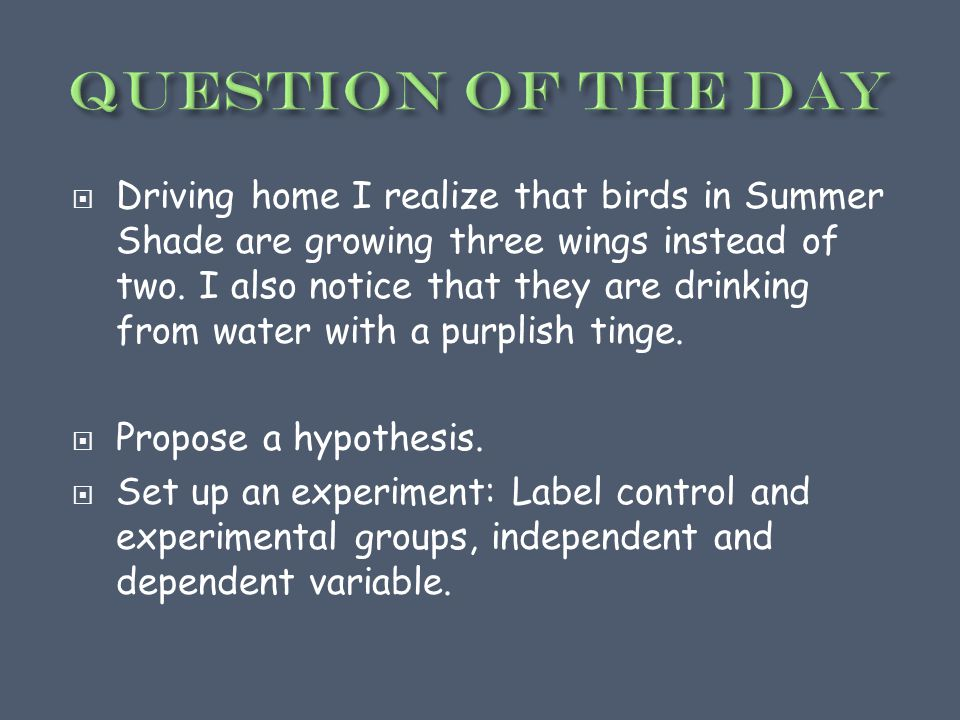  Driving home I realize that birds in Summer Shade are growing three wings instead of two.