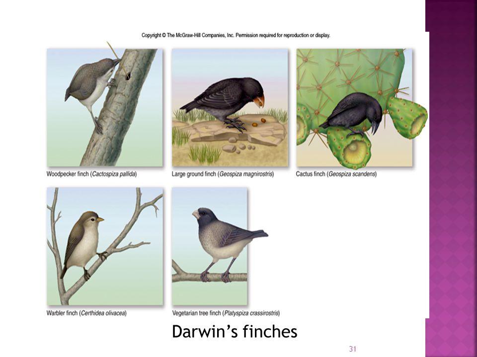 31 Darwin's finches