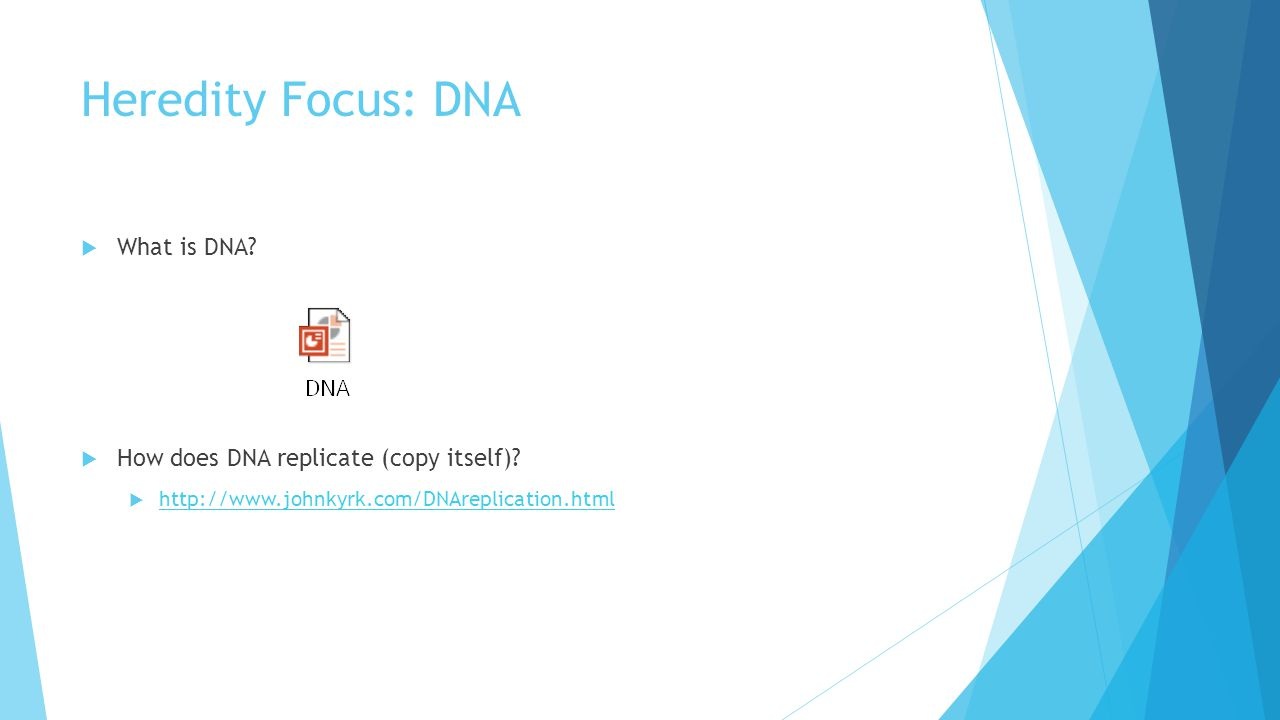 Heredity Focus: DNA  What is DNA.  How does DNA replicate (copy itself).