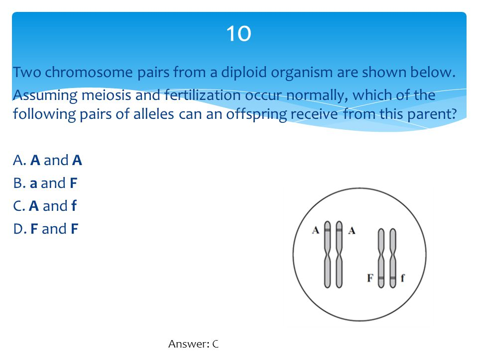 Two chromosome pairs from a diploid organism are shown below. Assuming meiosis and fertilization occur normally, which of the following pairs of allel
