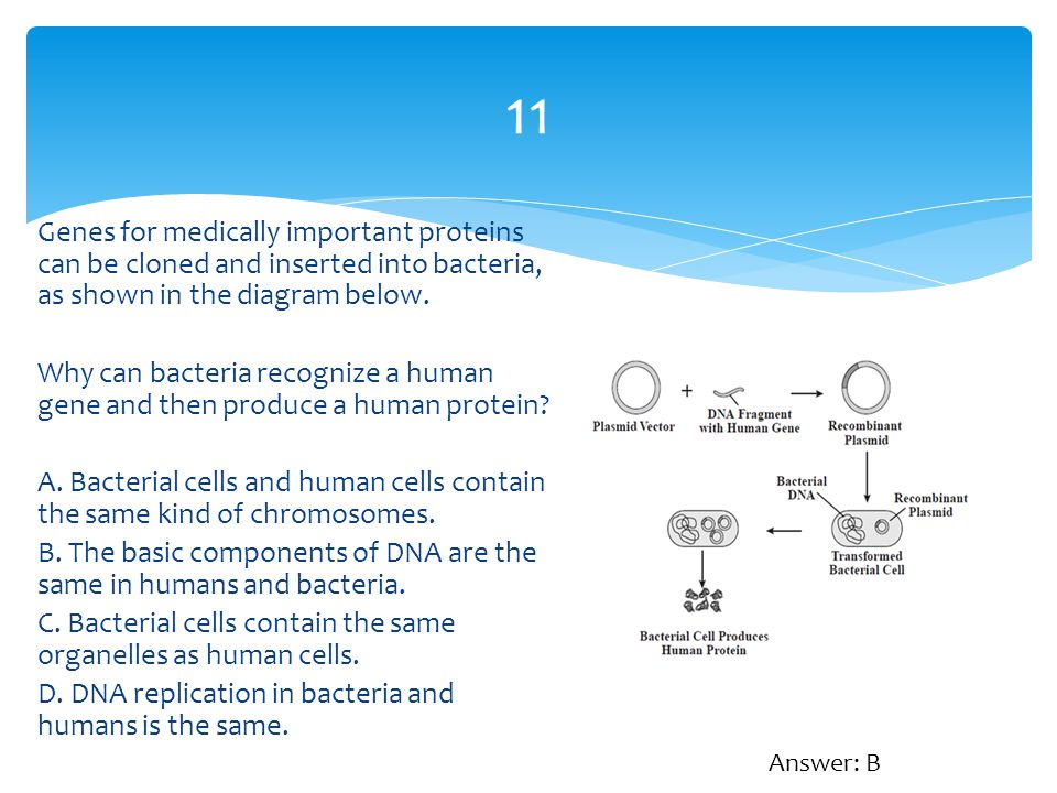 11 Genes for medically important proteins can be cloned and inserted into bacteria, as shown in the diagram below. Why can bacteria recognize a human