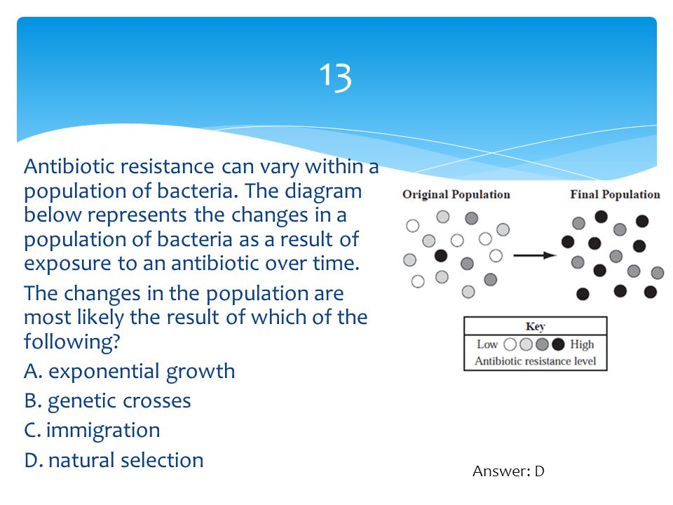 13 Antibiotic resistance can vary within a population of bacteria. The diagram below represents the changes in a population of bacteria as a result of