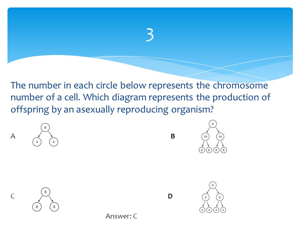 The number in each circle below represents the chromosome number of a cell. Which diagram represents the production of offspring by an asexually repro