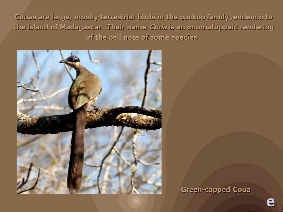 ציפורי מדגסקר וקולותיהם במדגסקר מוכרים 209 מיני ציפורים, 109 מהן אנדמים.