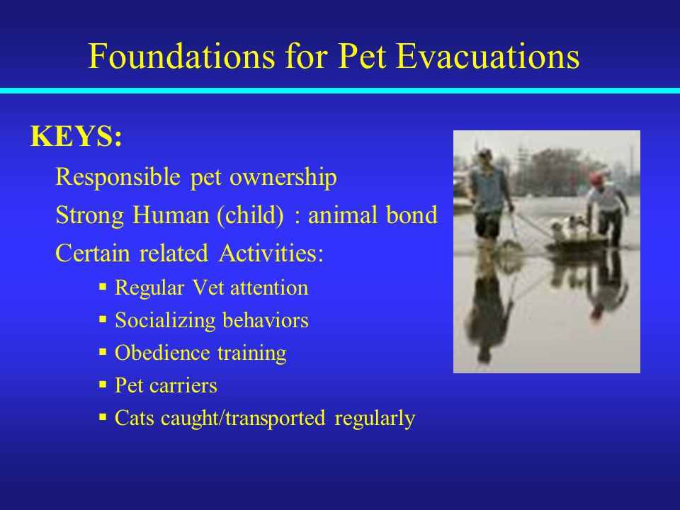 Foundations for Pet Evacuations KEYS: Responsible pet ownership Strong Human (child) : animal bond Certain related Activities:  Regular Vet attention  Socializing behaviors  Obedience training  Pet carriers  Cats caught/transported regularly