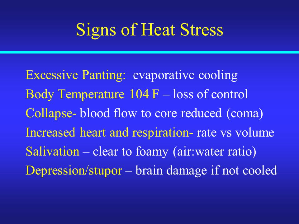 Signs of Heat Stress Excessive Panting: evaporative cooling Body Temperature 104 F – loss of control Collapse- blood flow to core reduced (coma) Increased heart and respiration- rate vs volume Salivation – clear to foamy (air:water ratio) Depression/stupor – brain damage if not cooled