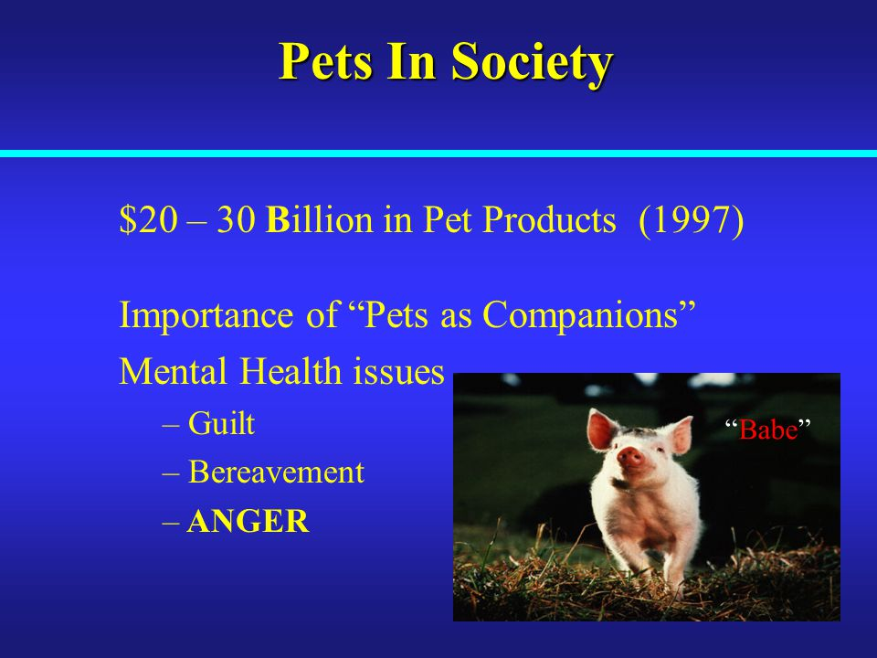 Pets In Society $20 – 30 Billion in Pet Products (1997) Importance of Pets as Companions Mental Health issues – Guilt – Bereavement – ANGER Babe