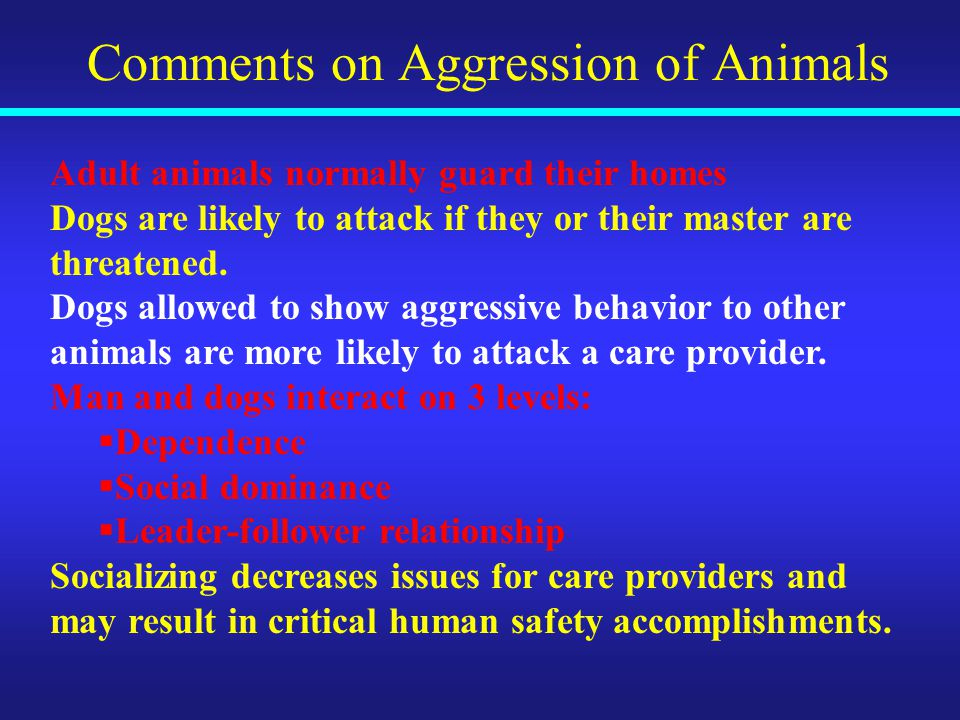Comments on Aggression of Animals Adult animals normally guard their homes Dogs are likely to attack if they or their master are threatened.