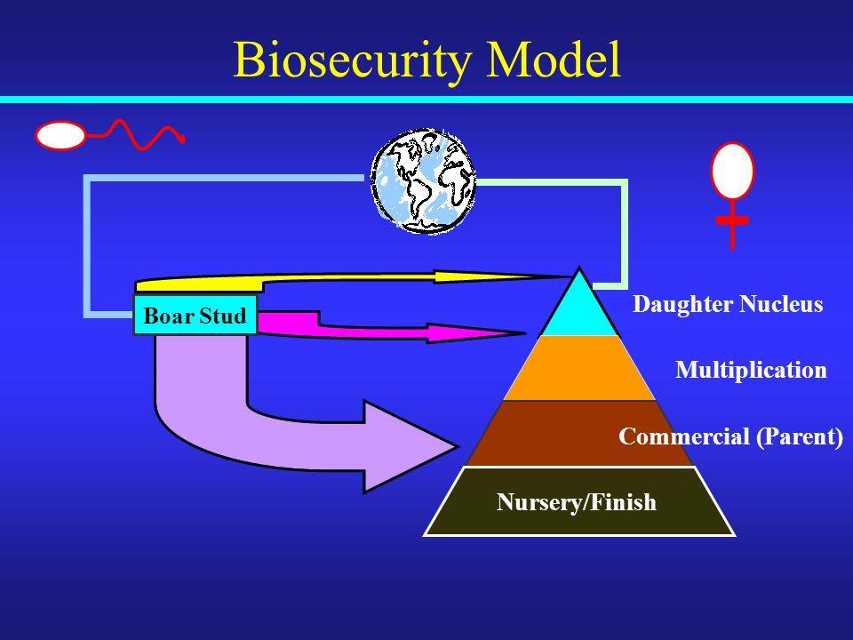 Biosecurity Model Boar Stud