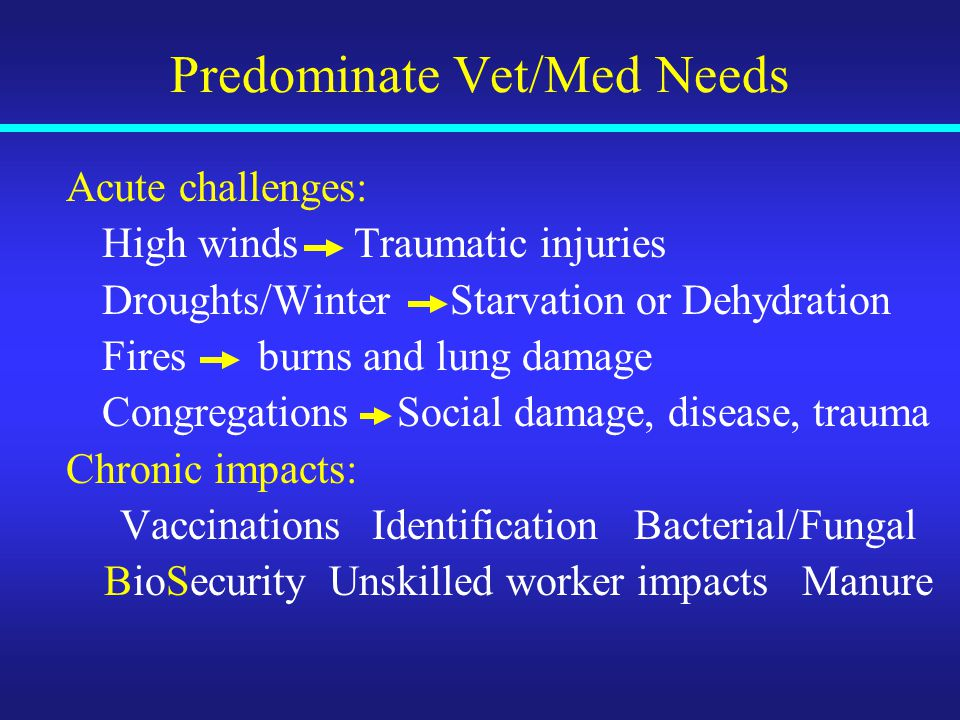 Predominate Vet/Med Needs Acute challenges: High windsTraumatic injuries Droughts/WinterStarvation or Dehydration Firesburns and lung damage Congregations Social damage, disease, trauma Chronic impacts: VaccinationsIdentification Bacterial/Fungal BioSecurity Unskilled worker impacts Manure