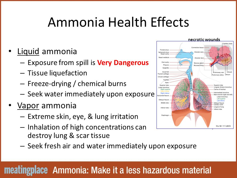 Ammonia Health Effects Liquid ammonia – Exposure from spill is Very Dangerous – Tissue liquefaction – Freeze-drying / chemical burns – Seek water immediately upon exposure Vapor ammonia – Extreme skin, eye, & lung irritation – Inhalation of high concentrations can destroy lung & scar tissue – Seek fresh air and water immediately upon exposure necrotic wounds Source: Wikipedia Source: Dr.