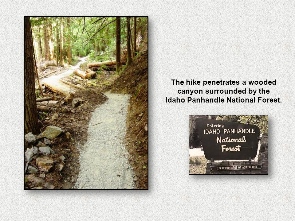 The hike penetrates a wooded canyon surrounded by the Idaho Panhandle National Forest.