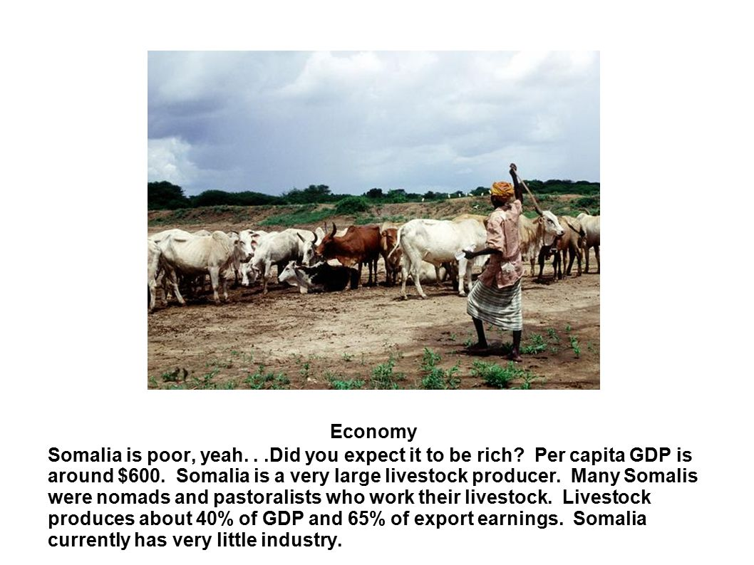 Economy Somalia is poor, yeah...Did you expect it to be rich? Per capita GDP is around $600. Somalia is a very large livestock producer. Many Somalis