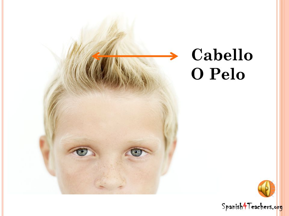 Cabello O Pelo Spanish4Teachers.org