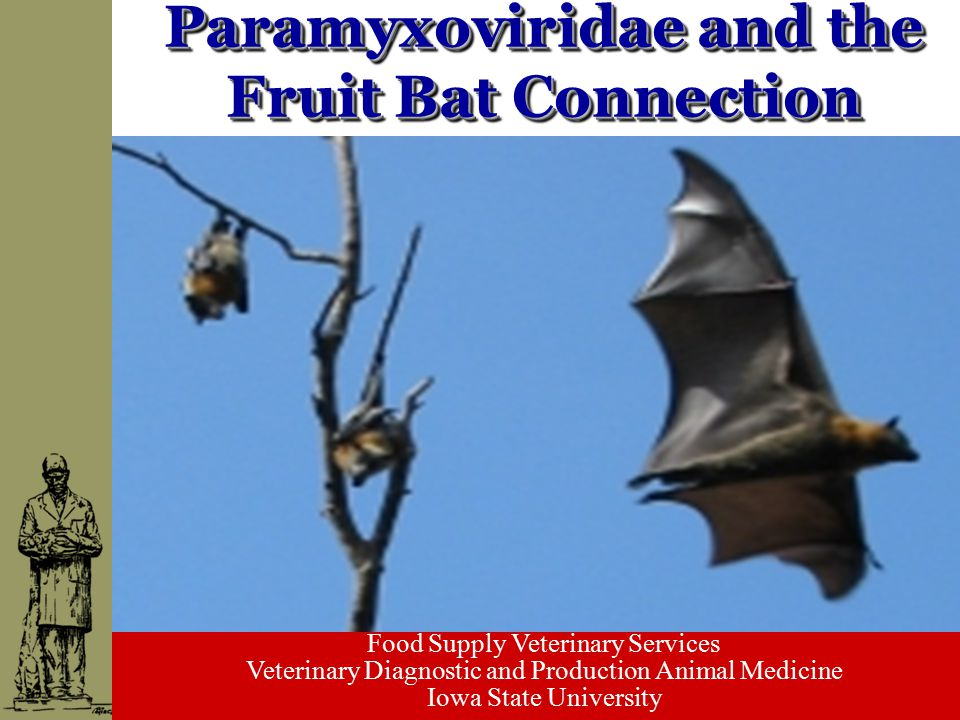 Food Supply Veterinary Services Veterinary Diagnostic and Production Animal Medicine Iowa State University Paramyxoviridae and the Fruit Bat Connectio