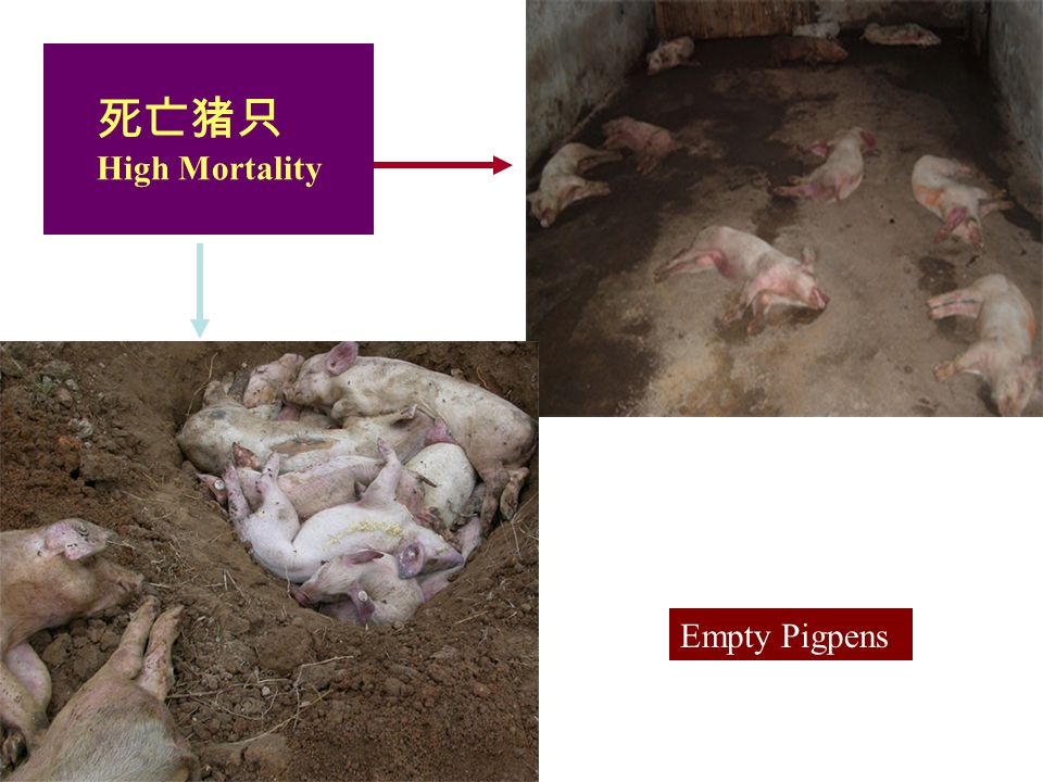 Food Supply Veterinary Services Veterinary Diagnostic and Production Animal Medicine Iowa State University 死亡猪只 High Mortality Empty Pigpens