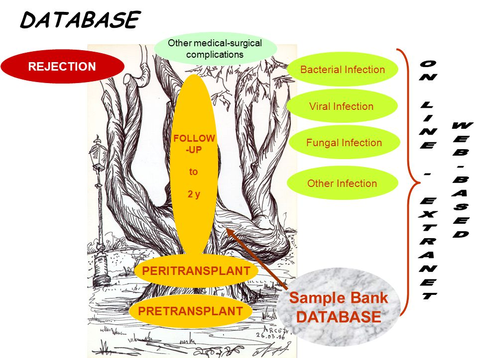 DATABASE PRETRANSPLANT PERITRANSPLANT FOLLOW -UP to 2 y Bacterial Infection Viral Infection Fungal Infection Other Infection REJECTION Other medical-surgical complications Sample Bank DATABASE