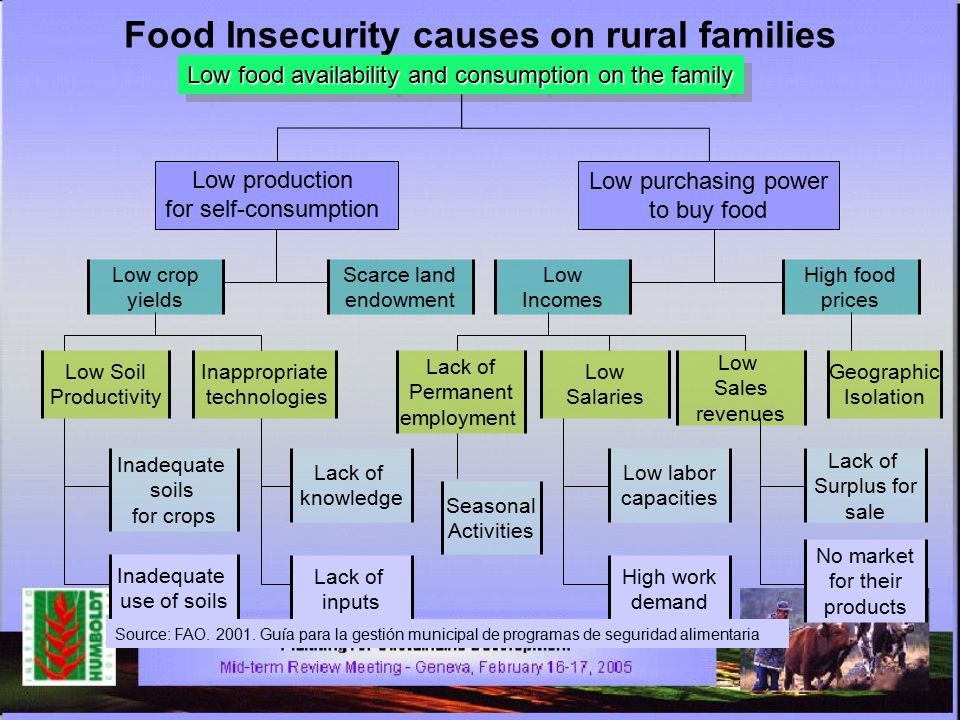 Food Insecurity causes on rural families Low food availability and consumption on the family Low production for self-consumption Low purchasing power