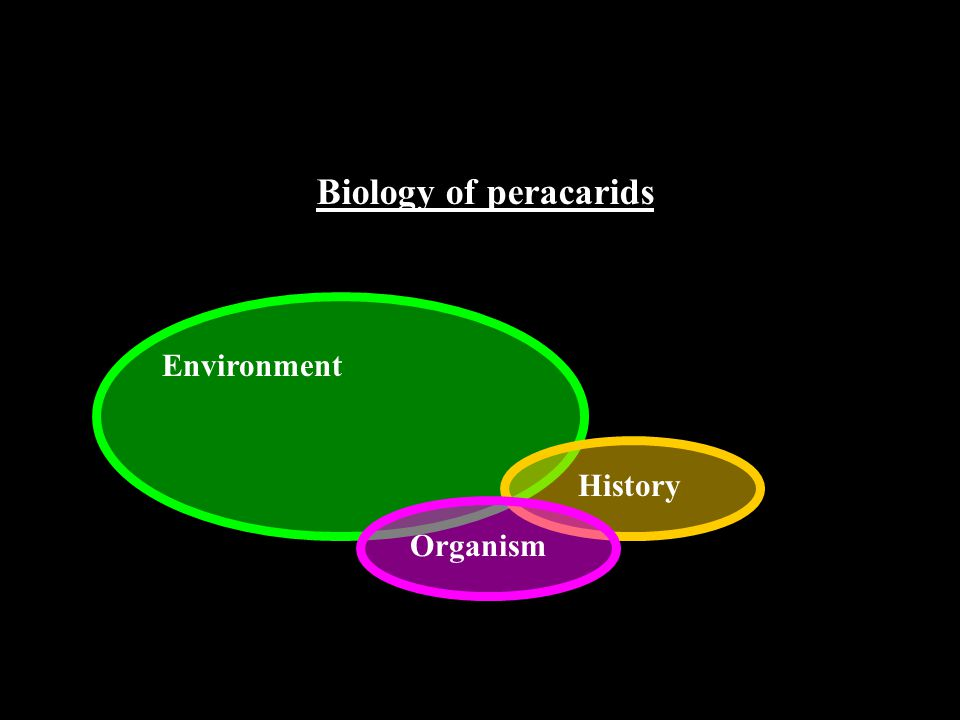 - Characteristics Biology of peracarids Morphological (Advantages and constraints) - Life history Reproduction Habits (Behaviour) Food Migrations - Habitats Requirements & selection