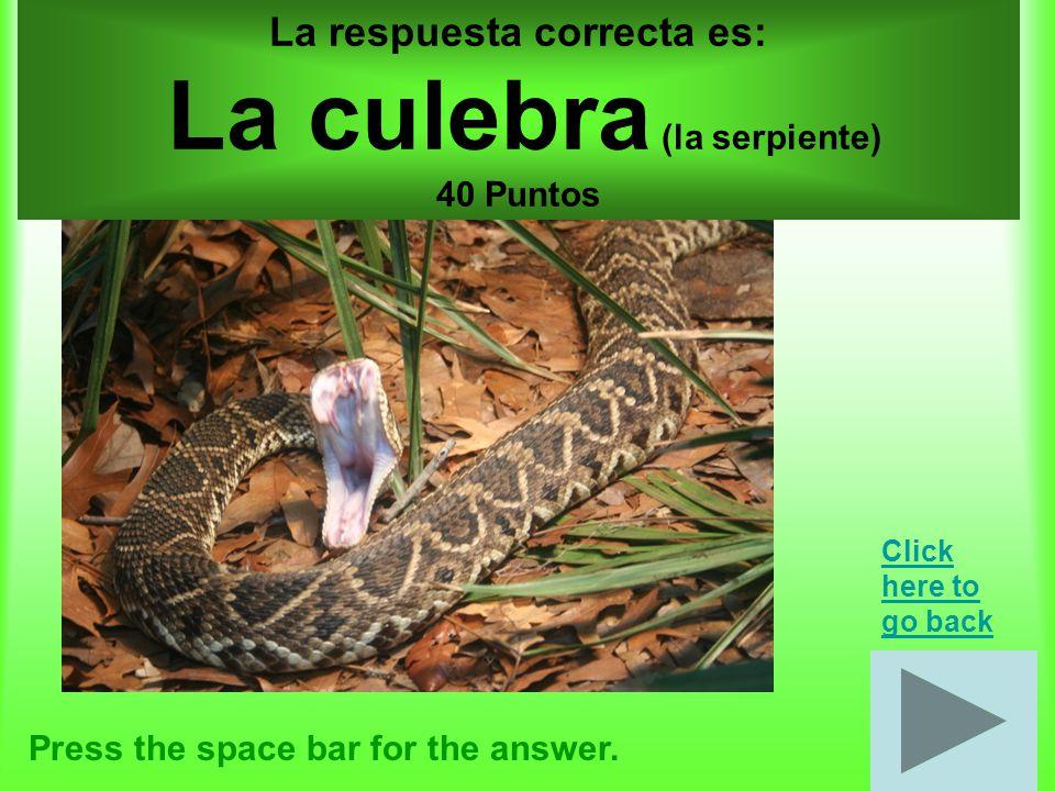 Animales por 50 puntos Press the space bar for the answer.