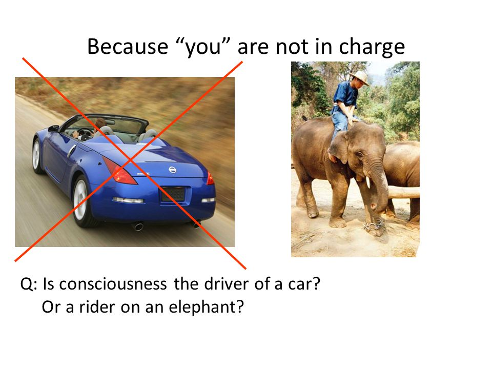 Because you are not in charge Q: Is consciousness the driver of a car? Or a rider on an elephant?