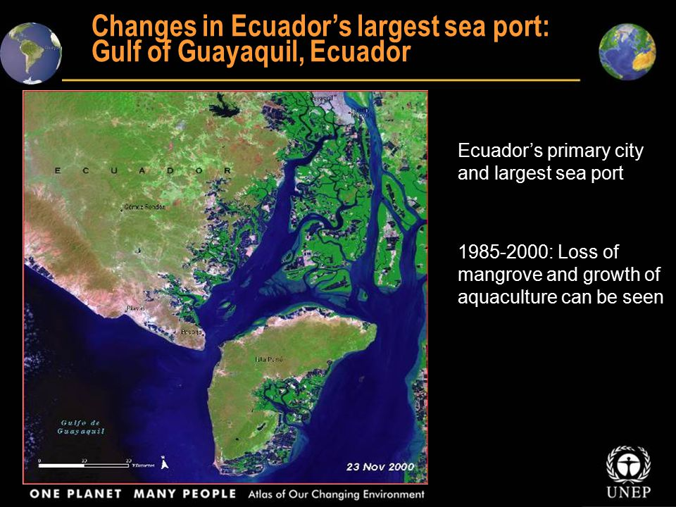 Shrimp farms replacing mangroves in Gulf of Fonseca, Honduras 1987-1999: shrimp farms and ponds have mushroomed, carpeting the landscape around the Gulf of Fonseca, Honduras, in blocks of blue and black shapes