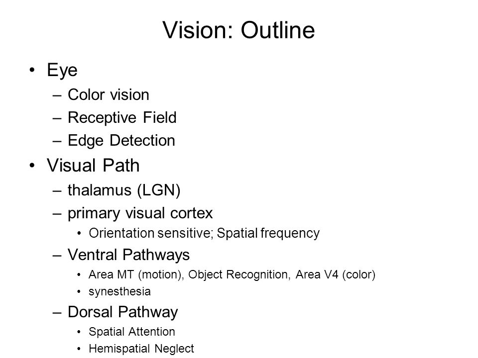 Vision: Outline Eye –Color vision –Receptive Field –Edge Detection Visual Path –thalamus (LGN) –primary visual cortex Orientation sensitive; Spatial frequency –Ventral Pathways Area MT (motion), Object Recognition, Area V4 (color) synesthesia –Dorsal Pathway Spatial Attention Hemispatial Neglect