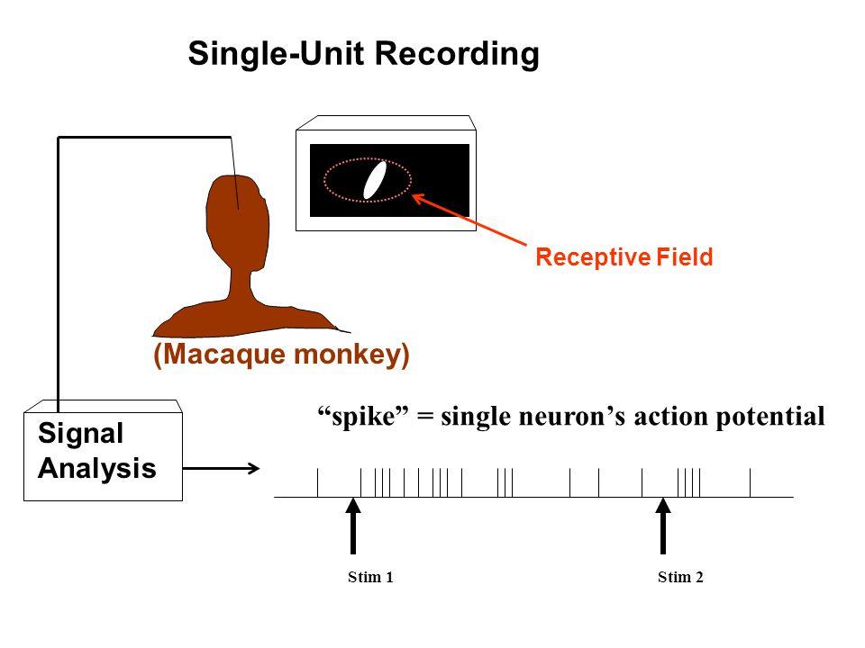 "Stim 1Stim 2 Single-Unit Recording ""spike"" = single neuron's action potential (Macaque monkey) Signal Analysis Receptive Field"