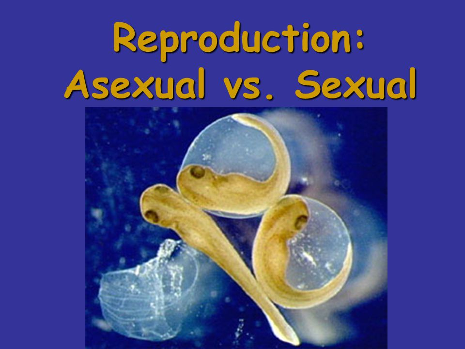 one 2. Asexual reproduction requires only one parent.