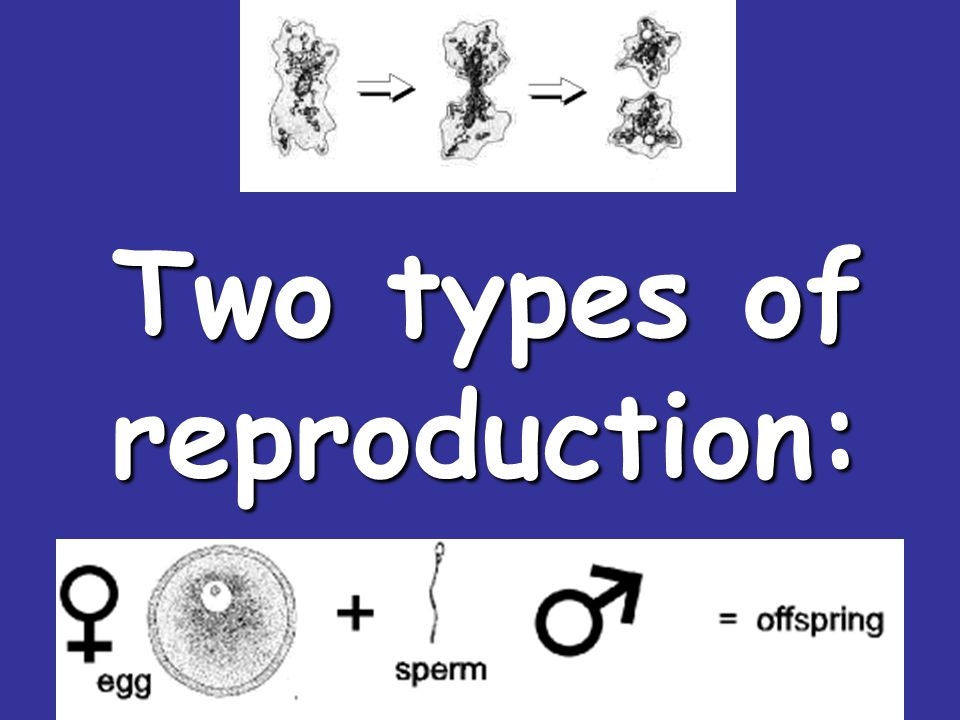 Two types of reproduction: