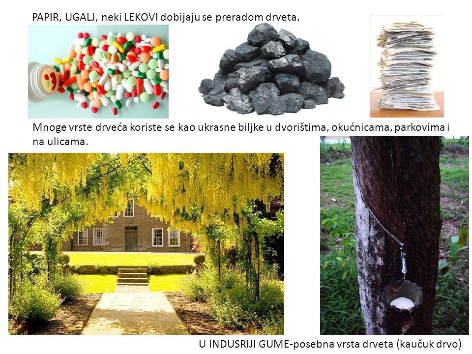 PAPIR, UGALJ, neki LEKOVI dobijaju se preradom drveta. U INDUSRIJI GUME-posebna vrsta drveta (kaučuk drvo) Mnoge vrste drveća koriste se kao ukrasne b