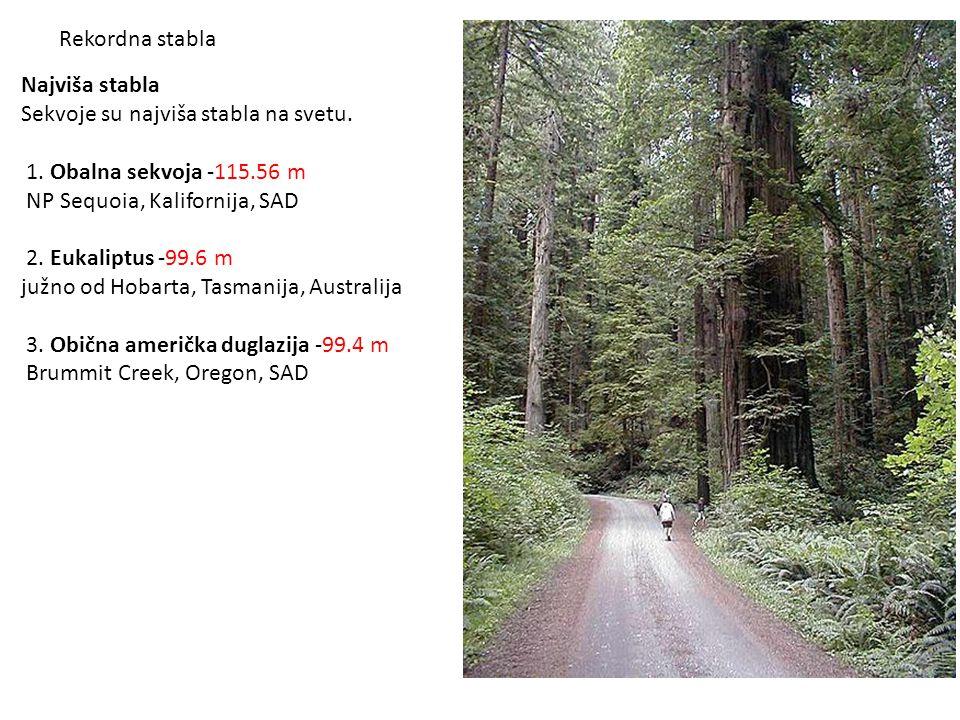 Najviša stabla Sekvoje su najviša stabla na svetu. 1. Obalna sekvoja -115.56 m NP Sequoia, Kalifornija, SAD 2. Eukaliptus -99.6 m južno od Hobarta, Ta