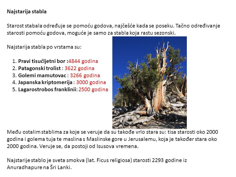 Najstarija stabla Starost stabala određuje se pomoću godova, najčešće kada se poseku. Tačno određivanje starosti pomoću godova, moguće je samo za stab
