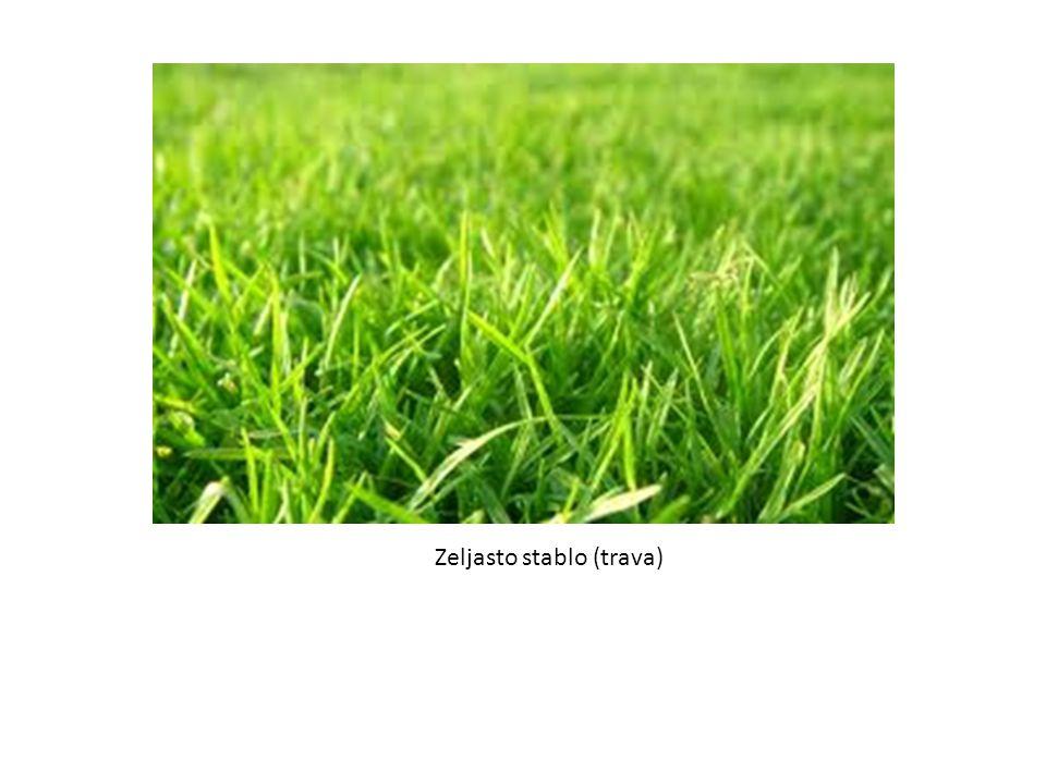 Zeljasto stablo (trava)