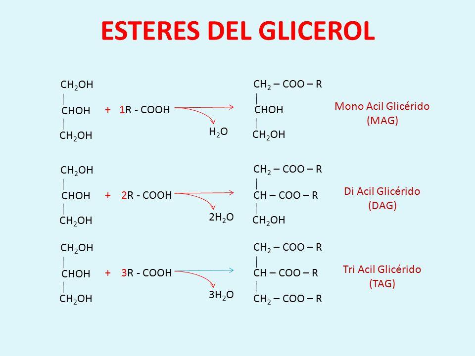 FOSFOLIPIDOS CH -- COOR CH 2 -- COOR Tri Acil Glicérido CH -- COOR CH 2 -- COOR CH 2 -- O – P - OH O OH CH -- COOR CH 2 -- COOR CH 2 -- O – P – O -- X O OH FosfoglicéridoFosfolípido X : Serina, Colina, Etanolamina, Inositol