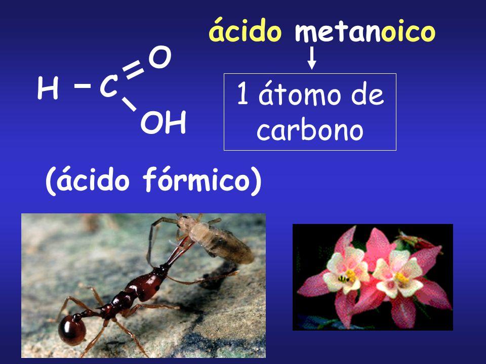 H C O OH ácido metanoico (ácido fórmico) 1 átomo de carbono
